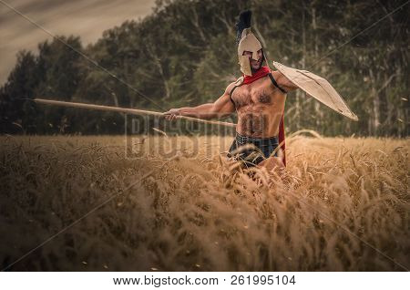 Ancient Spartan Warrior In The Helm And Spear In Hand Is Fighting In The  Wheat Field Background  poster