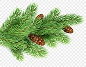 Fir Tree Branch Realistic Christmas Illustration. Spruce Color Twig With Pinecones On Transparent Ba poster