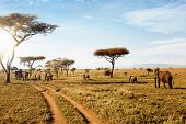 Group Of Elephants Walking In Beautiful National Park Serengeti, Tanzania, Africa. poster
