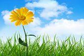 flor de laranjeira na grama sob o céu azul com nuvens