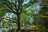 Path with green sprawling tree in forest and sunshine in september in Sweden, Europe. Part of the 10 poster