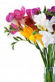 flores de Fresia, aislados sobre fondo blanco