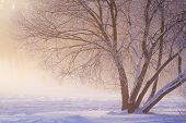 Winter Scene. Frosty Winter Landscape. Frost And Snow At Winter Morning. Christmas Background. Natur poster