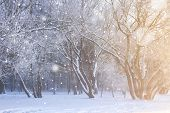 Frosty Trees In Snowfall. Winter Nature Landscape. Christmas Background. poster