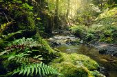 Stream In Rainforest. Stream In Rainforest Nature. Rainforest Stream. Nature. Stream. Natural Enviro poster