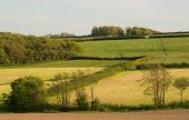 Countryside Of Fields And Hedges Near Bideford In Devon, England. Early Summer. poster