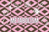 Text Sign Showing Metabolism. Conceptual Photo Chemical Processes In Body To Produce Energy Food Pro poster