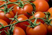 Tomato Closeup