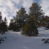 Forest Drifts