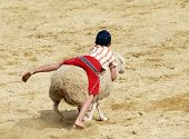 A child riding a sheep at a rodeo
