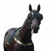 Racehorse with Pacifier Eye Mesh isolated with clipping path