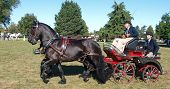 HASTINGS, NEW ZEALAND - MARCH 19: Pair of Carriage horses competing at the Horse of the Year March 1