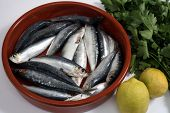 Sardines (pilchards) in a rustic bowl with their heads and innards removed and lemon and parsley bes
