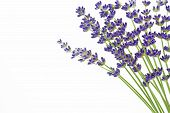 Lavender flowers (Lavandula angustifolia) on white background
