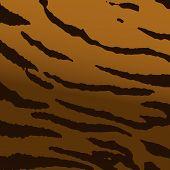 Wild Tiger Skin Texture, Vector Pattern