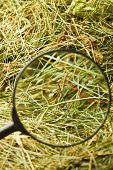 image of haystacks  - Finding the needle with magnifying glass in the haystack - JPG