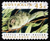 Postage Stamp Australia 1992 Little Pygmy Possum