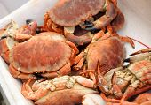 picture of stall  - Cooked crab on the fishmongers stall - JPG