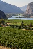 Okanagan Vineyard Scenic, British Columbia