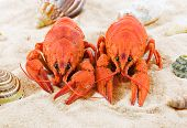Two Red Lobsters On A Sandy Beach