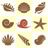 stock photo of scallops  - Vector collection of sea shells and snail - JPG