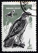 Postage Stamp Russia 1965 Common Buzzard, Bird Of Prey