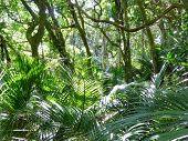 Bushland with palms