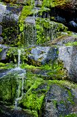 Water Trickling Over Mossy Rocks