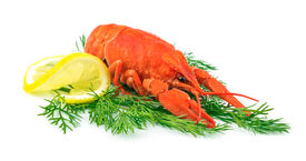picture of crawdads  - Red cooked lobster with lemon on dill isolated on white background - JPG