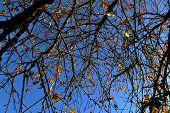 Cerezo en otoño