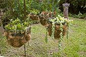 Four Hanging Flower Basket Arrangement In Garden Setting