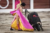 Spanish bullfighter Manuel Jesus El Cid with the capote or cape bullfighting a bull of nearly 600 kg