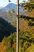 Tree With Broken Branches And View Of Austrian Alps