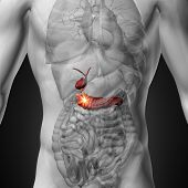 Gallbladder / Pancreas - Male anatomy of human organs - x-ray view