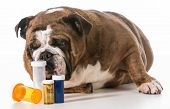 dog laying beside several pill bottles on white background - english bulldog