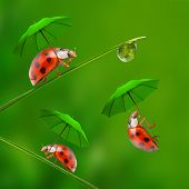 Funny picture from nature. Little ladybugs with umbrella jumping down to the grass.