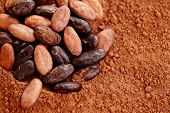 stock photo of cocoa beans  - raw cocoa beans on cocoa powder  - JPG