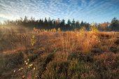 Gold Autumn Morning On Marsh