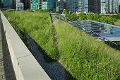 Urban Green Roof Grass