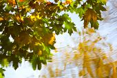 Reflection Of Autumn Leaves In Water