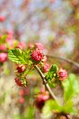 Beautiful fruit blossom, outdoors