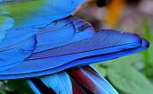 Close Up Of Blue And Green Macaw Bird Feathers In Great Details