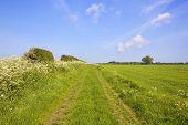 Scenic Bridleway