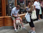 Man with pit bull meets lady with small dog