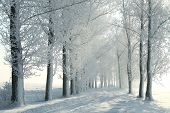 Winter country road in the morning