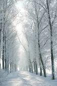 Winter rural road at dawn