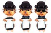 picture of mafia  - Dog dressed as mafia gangster holding phone with empty white screen - JPG