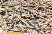Waste Wood Pile Abandon On The Ground