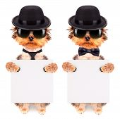 stock photo of mafia  - Dog dressed as mafia gangster and holding white paper banner - JPG