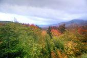 Zoomed landscape